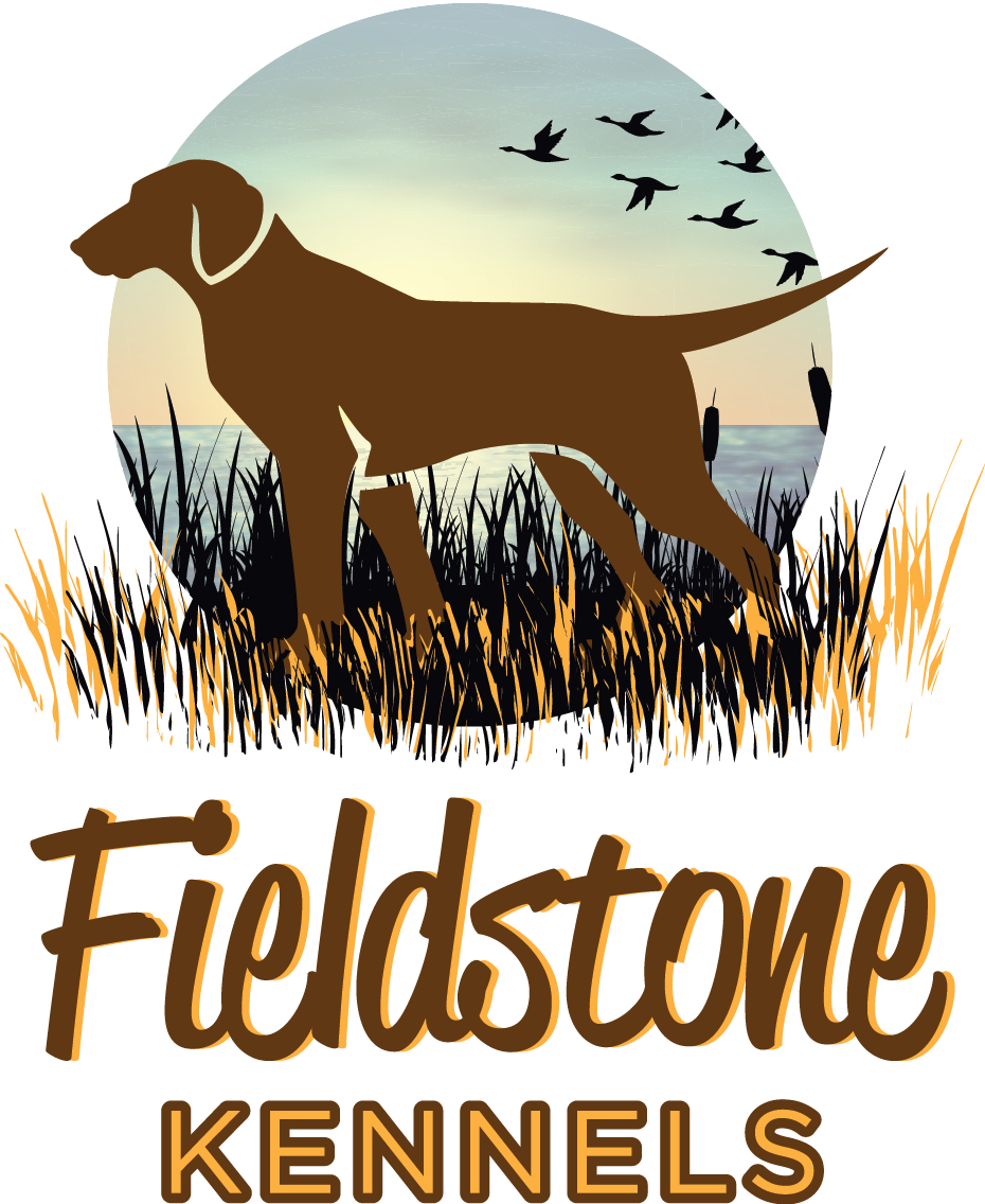 Fieldstone Kennels - Labrador Retriever Puppies for Sale